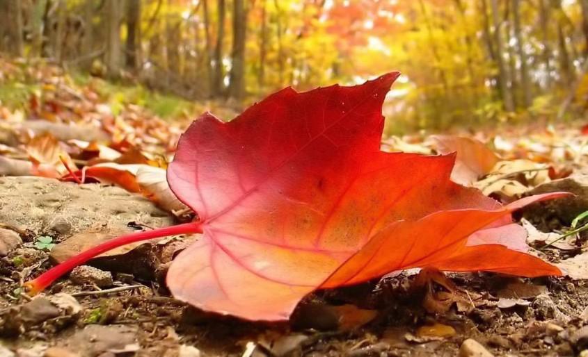 Perché gli alberi perdono le foglie? Notizie24h it