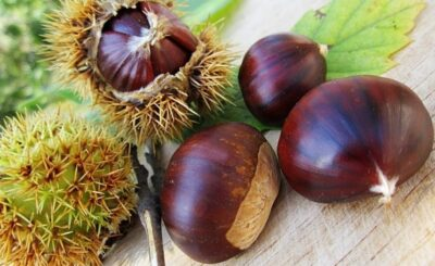 differenza tra castagne e marroni