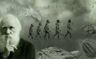 teoria della evoluzione