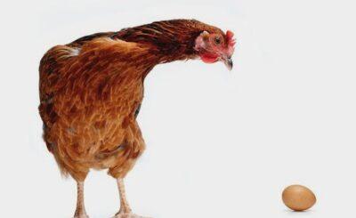 uovo o gallina