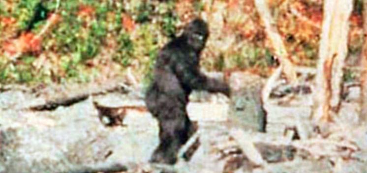 differenza yeti bigfoot, sasquatch