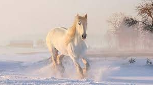 sognare un cavallo bianco